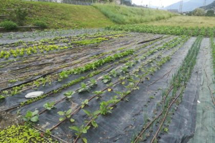 orto - vegetable garden